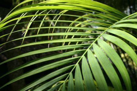 Relaks w palmiarni