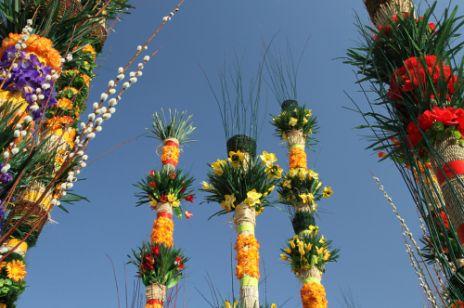 Szlakiem polskich palm
