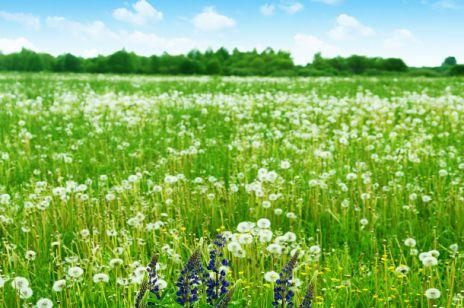 Sennik - łąka