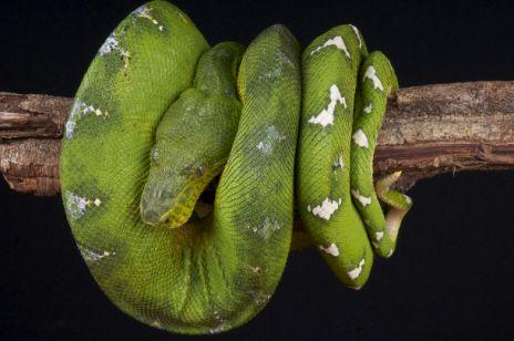 Sennik - wąż, sny o wężach