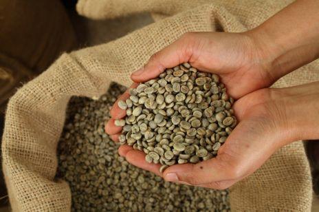 Zielona kawa - sprzymierzeniec w odchudzaniu