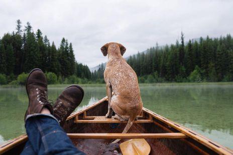 Pies Maddie w podróży ze swoim panem. Inspirujący Instagram!