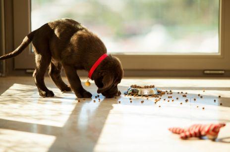 10 sposobów na czysty dom ze zwierzętami