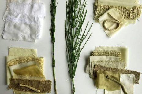 Zioła - podpowiadamy jakie właściwości mają poszczególne zioła i na jakie problemy zdrowotne odpowiadają