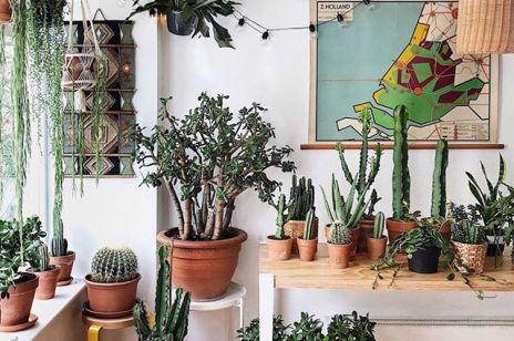 6 roślin doniczkowych dla początkujących, które dobrze wpłyną na twoje zdrowie