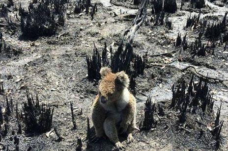 Te zdjęcia  i nagrania z Australii złamią ci serce