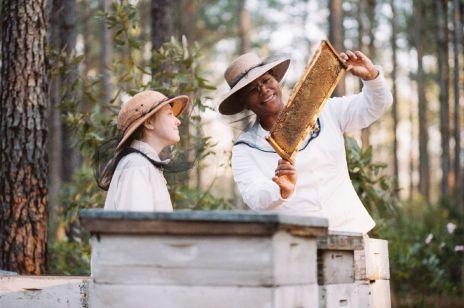 Pszczoła w mieście: super eko trend, który podbija wielkie aglomeracje