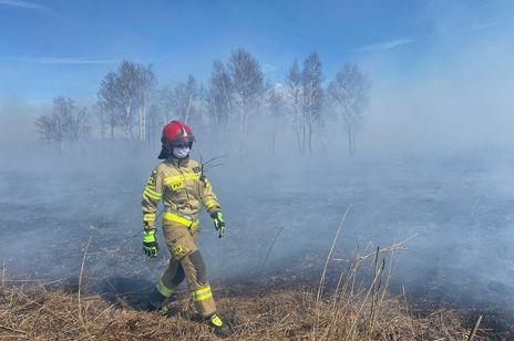 Pożar Biebrzańskiego Parku Narodowego ugaszony! Minister środowiska z dobrą nowiną