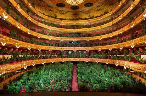 Rośliny w operze.  Niezwykły projekt zakończył stan wyjątkowy w Hiszpanii