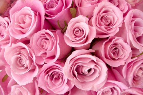 roze_claudii