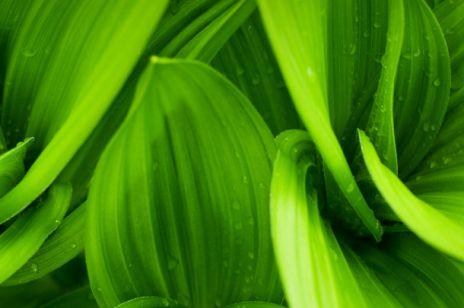Magia kolorów – zielony