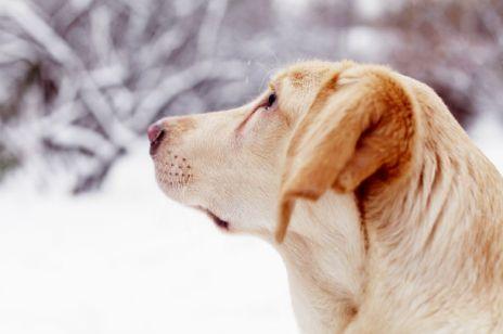 Zwierzęta zimą - jak o nie dbać?