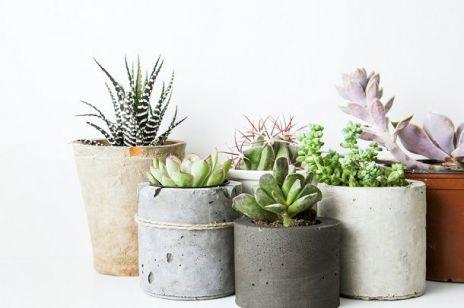 18 ROŚLIN oczyszczających powietrze w domu