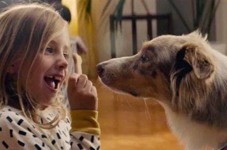 Ta nowa reklama IKEA Was wzruszy. Przedstawia piękną historię dwóch psów