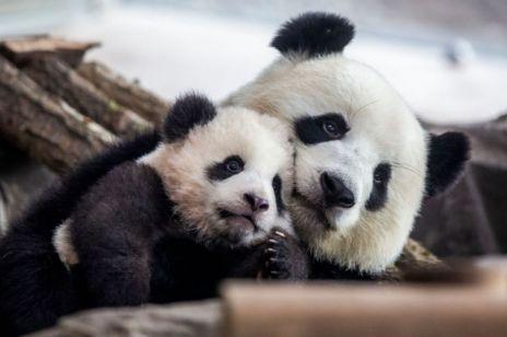 Słodkie szczeniaki, pingwiny i koala - te streamingi ze świata zwierząt to czysty relaks