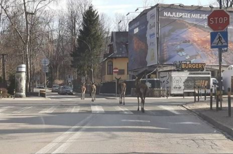 Natura odbiera to, co do niej należy! Zwierzęta przejmują kontrolę nad opuszczonymi miastami