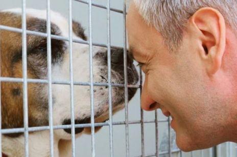 Wybory 2020: Czy politycy kochają zwierzęta? Któremu kandydatowi na prezydenta zależy też na tych, którzy głosu nie mają?