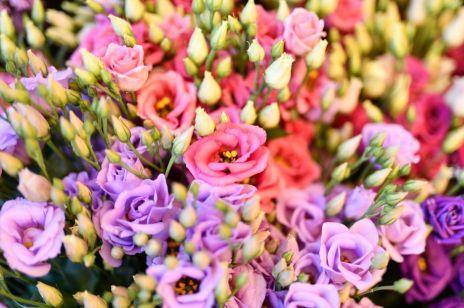 Eustoma: jak pielęgnować kwiat w doniczce i w ogrodzie? Jakie znaczenie ma kwiat eustomy?