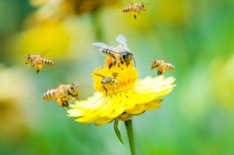 Ukąszenia owadów – domowe sposoby