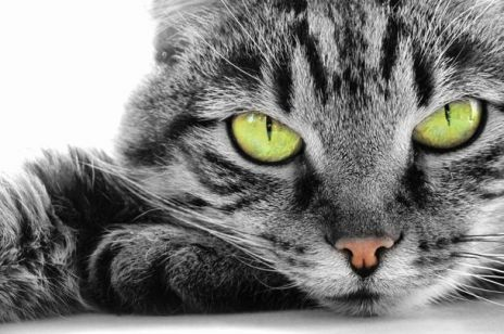 Mieszkanie z kotem – plusy i minusy
