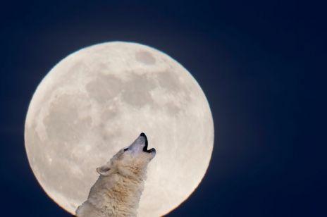 Halloween 2020. Niebieska pełnia Księżyca wypada dokładnie w tę noc i może przynieść wiele niespodzianek!