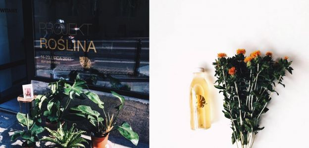 Projekt roślina