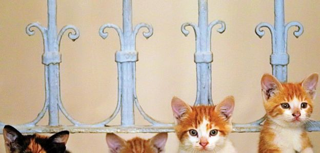 """""""Kedi. Sekretne życie kotów"""""""