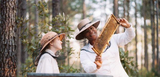 """""""Pszczoła w mieście"""": czy każde miejsce jest dobre dla pszczół?"""