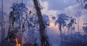 Coraz większe pożary w Amazonii mogą doprowadzić do katastrofy