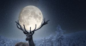 """""""Pełnia Wilczego Księżyca"""" pod koniec stycznia. Nie tylko Wilki będą niespokojne..."""