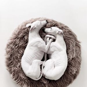 Zdjęcia psów, które wyglądają jak dzieła sztuki: to najsłodsze co dziś zobaczycie!