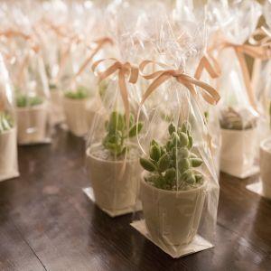 Prezenty dla gości weselnych - kwiaty doniczkowe