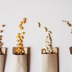 Prezenty dla gości weselnych - nasiona