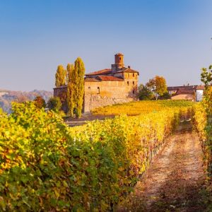 Piemont, dolina Langhe