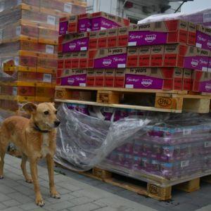 Mars dostarcza jedzenie zwierzętom w schroniskach