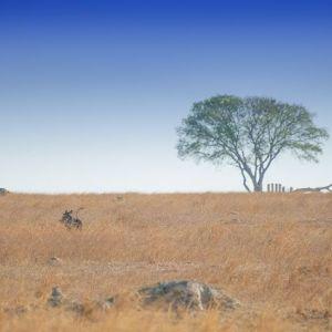 Zimbabwe w obiektywie Tomka Michniewicza