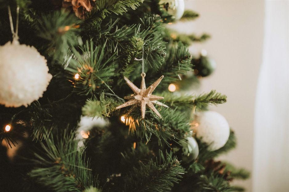 Święta przyjazne środowisku: choinka w doniczce