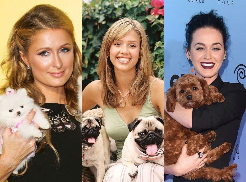 Czy rozpoznasz, który pies należy do danej gwiazdy?