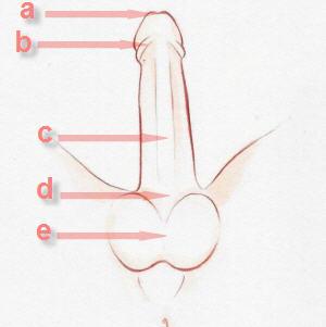 Jak Wzajemnie Dotykać Miejsc Intymnych Kobietapl